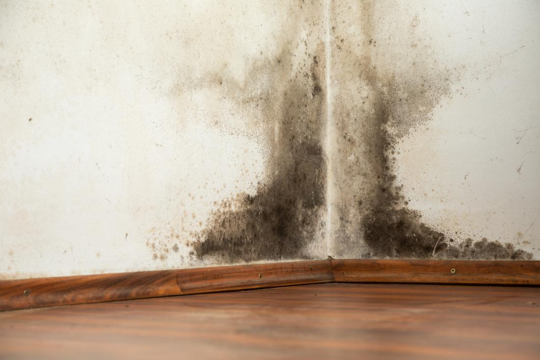 Worried about Black Mold