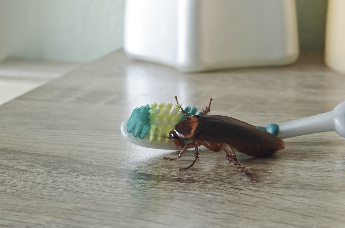 cleaning the home of insects55