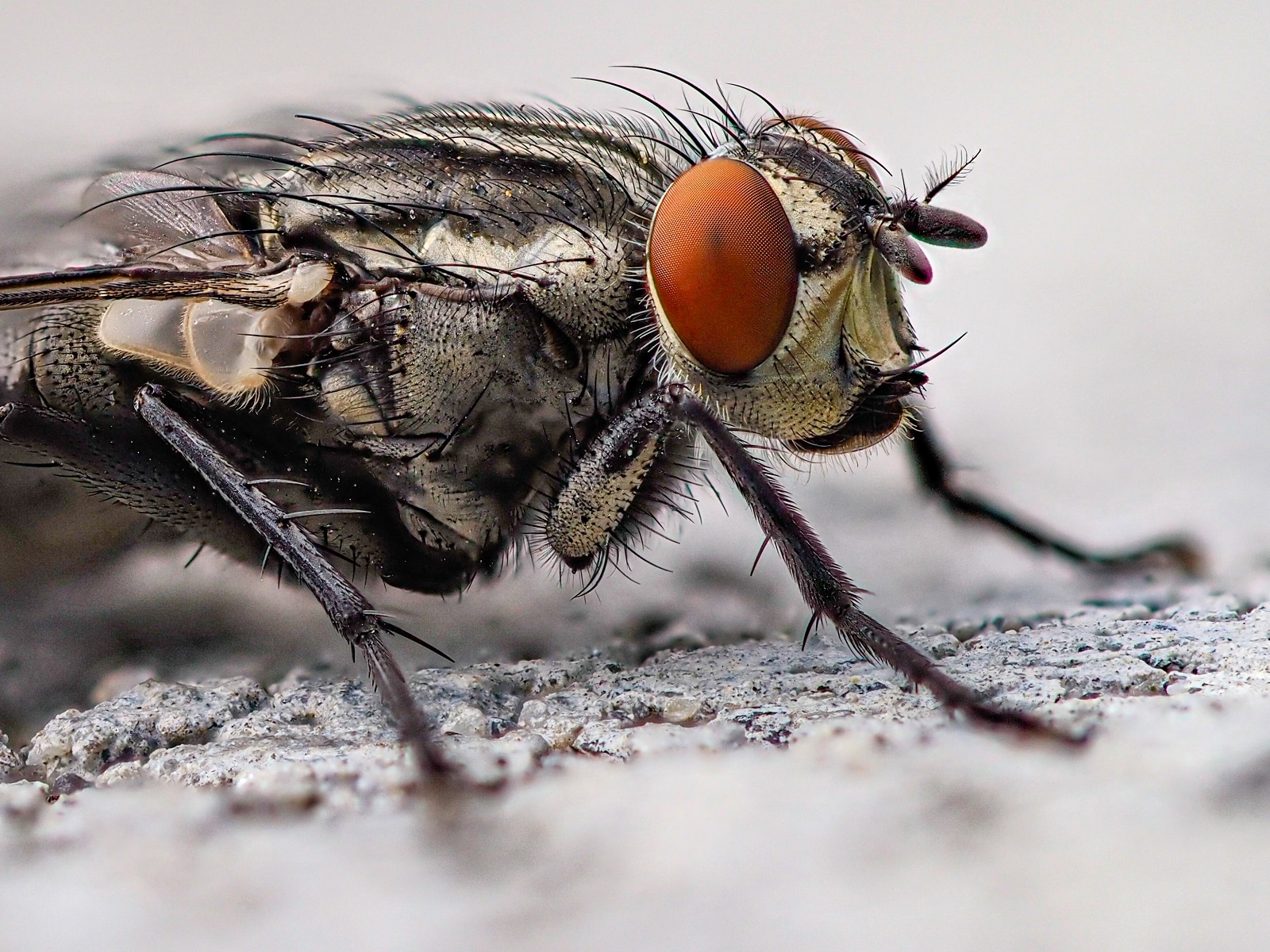 Fly Infestation